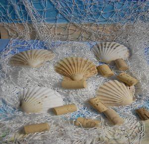5 Jakobsmuscheln und ein weisses Fischernetz