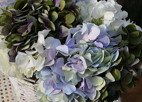 hortensienbunt